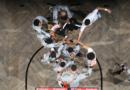 Los Suns, once años perdidos en el desierto de Phoenix